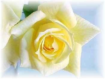 The yellow rose of texas mightylinksfo